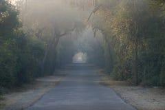 Estrada fechada por árvores Imagem de Stock Royalty Free