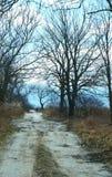 Estrada, floresta, mola, árvore, fuga, céu azul Imagens de Stock