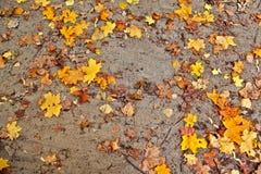Estrada fraca do outono com folhas amarelas Fotos de Stock Royalty Free