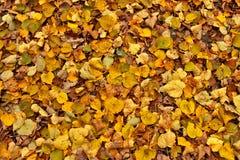 Estrada fraca do outono com folhas amarelas Imagem de Stock Royalty Free