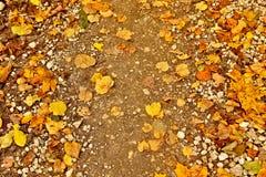 Estrada fraca do outono com folhas amarelas Imagens de Stock