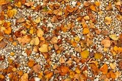 Estrada fraca do outono com folhas amarelas Fotografia de Stock Royalty Free