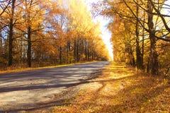 Estrada impressionante do outono Fotos de Stock