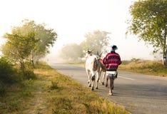 Estrada indiana da vila Fotos de Stock