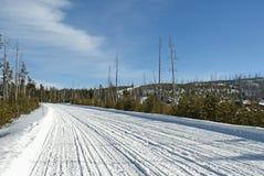 Estrada, inverno, Yellowstone NP Fotografia de Stock