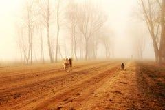 Estrada místico na névoa com cães Fotos de Stock Royalty Free