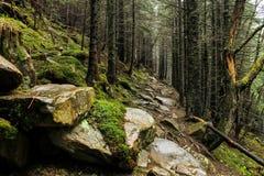 Estrada místico no dia de mola nevoento da floresta Foto de Stock