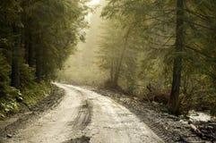 a estrada a mais forrest Foto de Stock