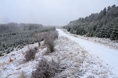 Estrada menor coberta com as nevadas fortes Fotos de Stock Royalty Free