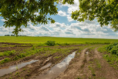 Estrada moída com reflexão do trajeto da poça para esverdear o campo de trigo Foto de Stock Royalty Free