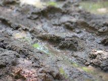 Estrada molhada da sujeira Fotos de Stock