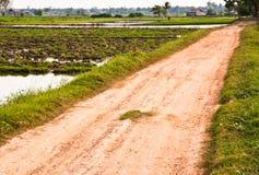 Estrada na área para plantar. fotografia de stock royalty free