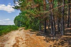 Estrada na borda da floresta Imagem de Stock Royalty Free