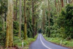 Estrada na floresta úmida Imagens de Stock