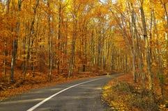 Estrada na floresta imagem de stock royalty free
