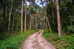 Estrada na floresta Imagens de Stock Royalty Free