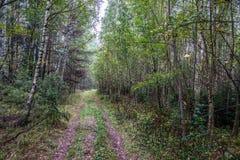 A estrada na floresta Foto de Stock