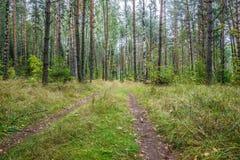 A estrada na floresta Fotos de Stock