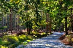 Estrada na floresta Imagem de Stock