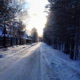 Estrada na floresta Fotos de Stock