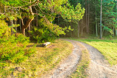 Estrada na floresta Imagens de Stock