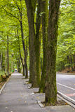 Estrada na floresta Fotografia de Stock Royalty Free