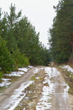 Estrada na floresta Fotos de Stock Royalty Free