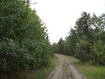 A estrada na floresta Foto de Stock Royalty Free