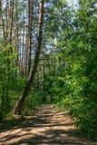 Estrada na floresta Fotografia de Stock