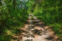 Estrada na floresta Foto de Stock Royalty Free