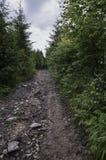 A estrada na floresta Fotos de Stock Royalty Free