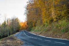 Estrada na floresta amarela do outono Foto de Stock Royalty Free