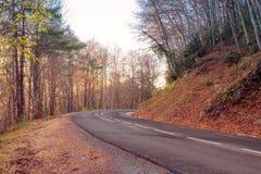 Estrada na floresta amarela do outono Imagens de Stock Royalty Free
