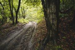 Estrada na floresta após a chuva Fotos de Stock