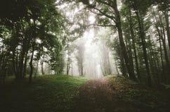 Estrada na floresta assustador escura com névoa no dia frio Fotografia de Stock