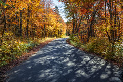 Estrada na floresta da queda fotografia de stock royalty free