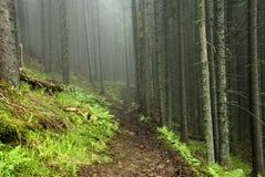 Estrada na floresta do horror na névoa Imagem de Stock