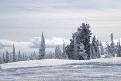 Estrada na floresta do inverno Fotos de Stock