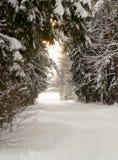 Estrada na floresta do inverno Fotos de Stock Royalty Free