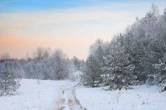 A estrada na floresta do inverno imagens de stock