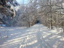 Estrada na floresta do inverno Imagens de Stock