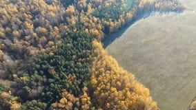 Estrada na floresta do outono vídeos de arquivo