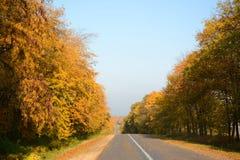 Estrada na floresta do outono Fotografia de Stock