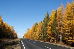 Estrada na floresta do outono Foto de Stock
