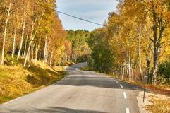 Estrada na floresta do outono Imagem de Stock Royalty Free