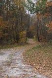 Estrada na floresta do outono Foto de Stock Royalty Free