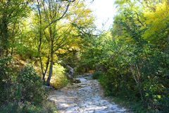 Estrada na floresta do outono imagens de stock