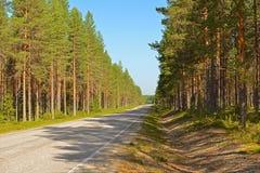 Estrada na floresta do pinho no dia ensolarado imagem de stock