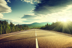Estrada na floresta do verão Imagem de Stock