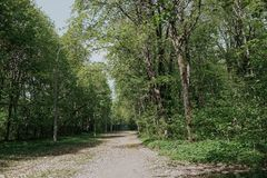 A estrada na floresta do ver?o fotografia de stock royalty free